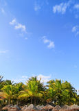 carmen del Mexico palapa palmowi playa drzewa tropikalni Fotografia Royalty Free