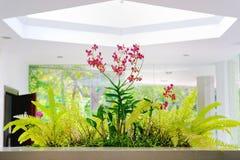 Carmine Orchids rojo con las hojas verdes Foto de archivo libre de regalías