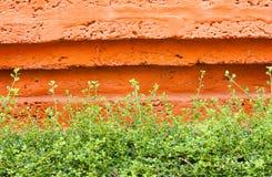 Carmona retusa (Vahl) Masam. Stock Photo