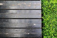 Carmona retusa (Vahl) Masam and wooden sidewalk Royalty Free Stock Images