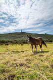 Carn Brea Stock Images