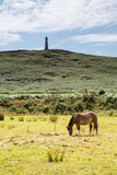 Carn Brea. In cornwall, england uk with a view of the monument near redruth. With horse in the foreground Stock Photography