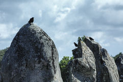 Carnac (Bretagna, Francia): piccoli uccelli sui menhir Fotografia Stock Libera da Diritti