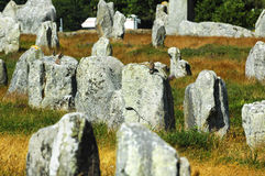 Carnac (Brittany, France): birds on the menhirs Stock Photography