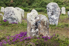 Carnac stones Royalty Free Stock Photography