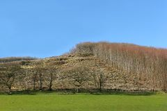 Carnage of the Forest. Hillside with areas of forest cut down with areas of trees still remaining. Set against a clear blue sky Royalty Free Stock Images
