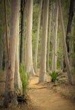 Carnarvon Gorge forest Stock Images