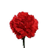 Carnation 1. Red carnation flower on a white background royalty free stock images