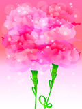 Carnation. Illustration background of pale pink carnation Stock Illustration