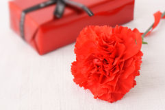 Carnation. A red carnation and little gift box Royalty Free Stock Photos