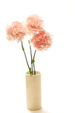Carnation Stock Photography