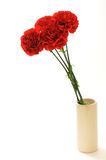 Carnation. Red carnation in a vase for Mother's day Royalty Free Stock Photo