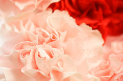 Carnation. Bouquet for Mother's day Royalty Free Stock Photo