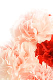 Carnation. Bouquet for Mother's day Royalty Free Stock Images