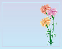 Carnation. Bouquet from three carnations of pink and beige color on a blue background with a framework Stock Photo
