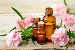 Carnation absolute essential oil and pink flowers on the wooden table. Carnation absolute essential oil and pink flowers on the wooden board Royalty Free Stock Image