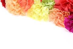Carnation background Stock Photo
