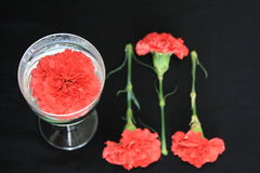 Carnation on black. Background red or deep pink in glas with water pattern Royalty Free Stock Photo