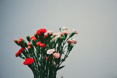 Carnation bouquet Royalty Free Stock Photos