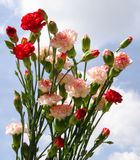 Carnation Bouquet Stock Images
