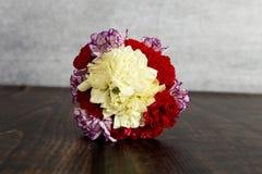Carnation Royalty Free Stock Photos