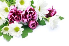 Carnation and chrysanthemum Stock Photo