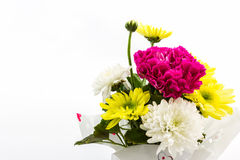 Carnation and chrysanthemum flower in vase. Royalty Free Stock Photo