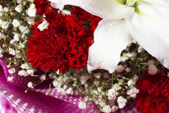 Carnation close-up Royalty Free Stock Photography