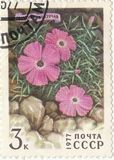Carnation creeping. Soviet postage stamp `Carnation creeping`1977 Stock Image