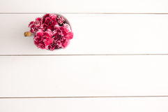 Carnation cup background Stock Images