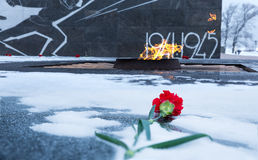 Carnation flower assigned to eternal flame in memory of soldiers Stock Image