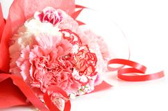Carnation flower gift Royalty Free Stock Photography