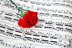 Carnation flower with sheet music 2. Red carnation flower lying on piano sheet music Stock Photo