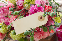 Carnation flowers with blank tag Stock Image