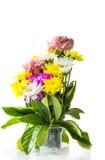 Carnation Stock Image