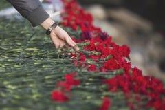 Carnation flowers symbol of mourning Stock Image