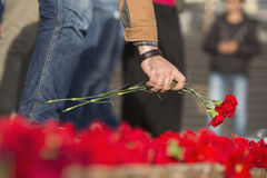 Carnation flowers symbol of mourning Royalty Free Stock Photo
