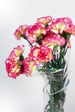 Carnation flowers on the white background Stock Photos