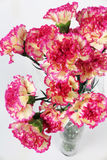 Carnation flowers on the white background Royalty Free Stock Images