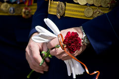 Carnation in the hands. Of the Russian veteran of Great Patriotic War Stock Photo
