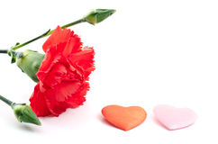 Carnation and heart Stock Image