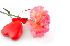 Carnation and a heart Royalty Free Stock Images