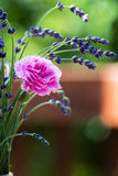 Carnation and Lavender Flower Bouquet Stock Images