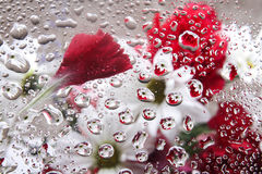 A carnation laying in water droplets Royalty Free Stock Photography