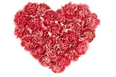 Carnation In Love Shape Stock Photo