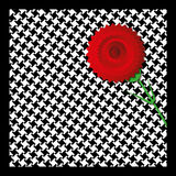 Carnation in Madrid. Illustration of a carnation on houndstooth fabric, typical of traditional Madrid costume Stock Photos