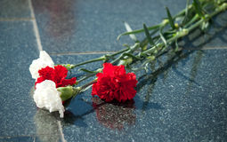 Carnation on marble. Red carnation on black marble stock photography