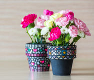 Carnation in mosaic flower pot. On white background stock photography