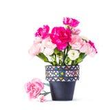Carnation in mosaic flower pot Royalty Free Stock Photos