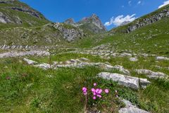 Carnation between mountains in Montenegro Stock Images